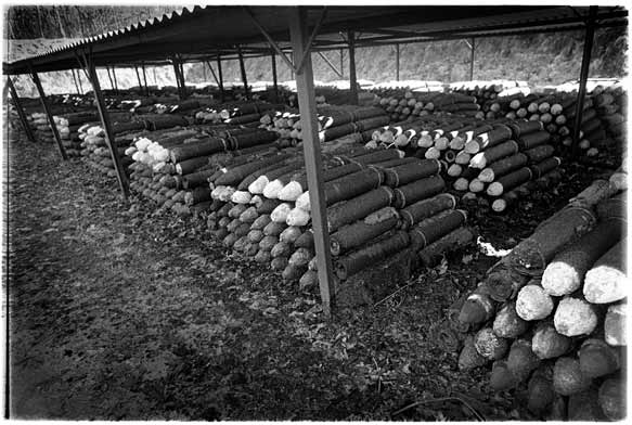 German poison gas shells in Belgium, date and place uncertain.