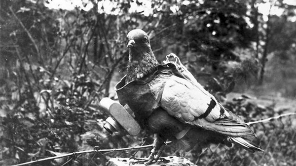 Both sides made extensive of carrier pigeons during the war, to send messages and photograph the battlefield.