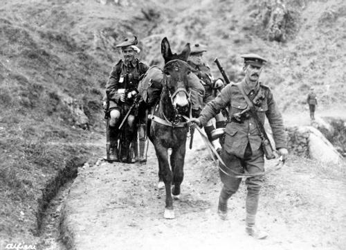 Wounded British troops transported by mule, Salonika front.